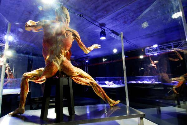 corpo humano exposicao